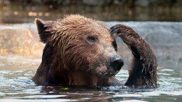 This perma-bear is wondering what to do after trading all his salmon for gold.
