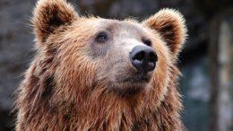 Bear long-term